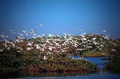 Vedanthangal Bird Sanctuary