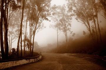 En route to Nandi Hills
