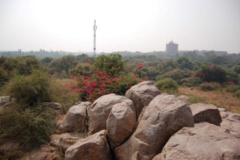 Parthasarathy Rocks, JNU Campus