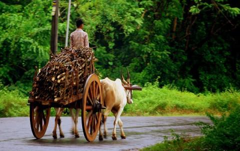 Bullockcart