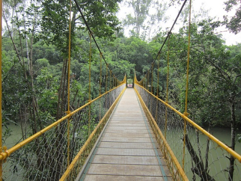 Hanging bridge, Coorg